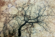Branches On Stone