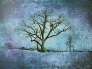 Highlawn Tree 2