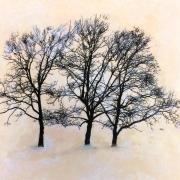 Three Trees11