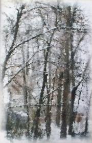 Winter Trees 3