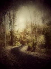 Autumn Again