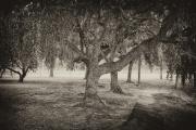 Degnan Trees