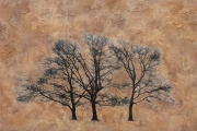5 Heidi Sussman Three Trees In the Afternoon